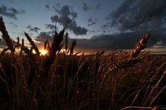 See You Soon (innerinsky) Tags: sunset nikon harvest tokina prairie sooc 1116mm d300s innerinsky