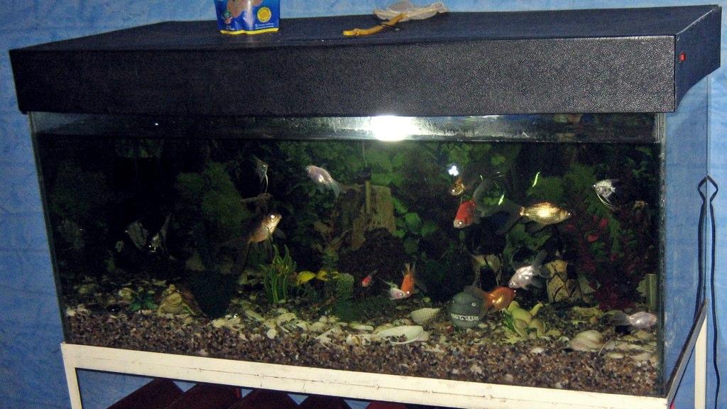 les presento mi acuario de 10 años de antiguedad !