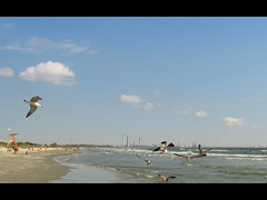 (Bia.dreams) Tags: blue sea beach clouds seaside sand seagull shore romania blacksea scky bybia