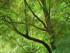 Autumn winds (Billy Clapham) Tags: autumn trees summer blur tree green film nature grass leaves fuji august filter bark finepix nd ash chestnut billy fujifilm win clapham circular density neutral s200 polariser exr utterby s200exr