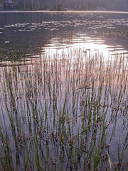 Setting sun and lily pads (Jrk3) Tags: dorothylake lakesunset alpinelakeswilderness wahiking