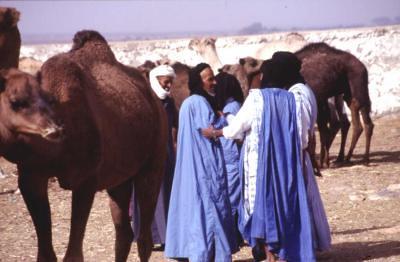 marché aux dromadaires Amhayrich