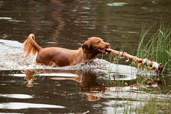 (Waterjuffer1) Tags: water nederland hond september hei limburg 2011 beegderhei waterjuffer1