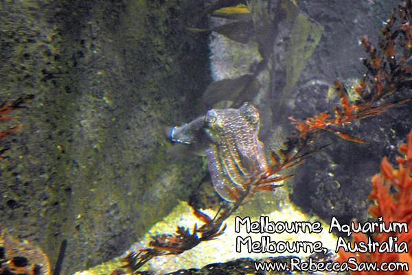 MELBOURNE AQUARIUM-22