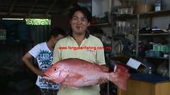 20100626 (fymac@live.com) Tags: mackerel fishing redsnapper shimano pancing angling daiwa tenggiri sarawaktourism sarawakfishing malaysiafishing borneotour malaysiaangling jiggingmaster