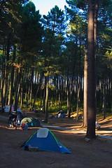 All'Ombra dei Pini Larici (Roveclimb) Tags: voyage wood trip travel camping holiday tree alberi forest corse corsica tent viaggio vacanza tenda bosco foresta campeggio altarocca zonza