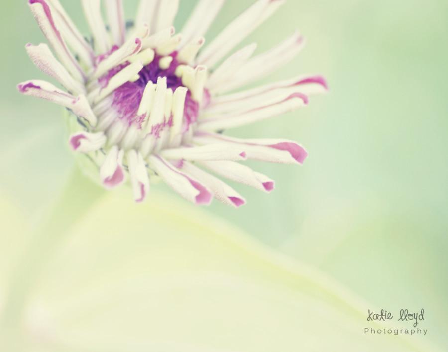 zinnia-mint---11x14