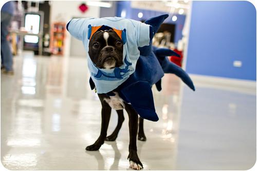 T-Shark Dog!
