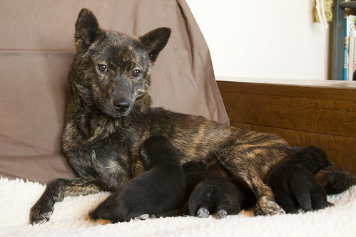 Kumi's First Litter