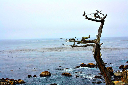 Ghost Tree, 17 Mile Drive, CA by Pictures Speak!