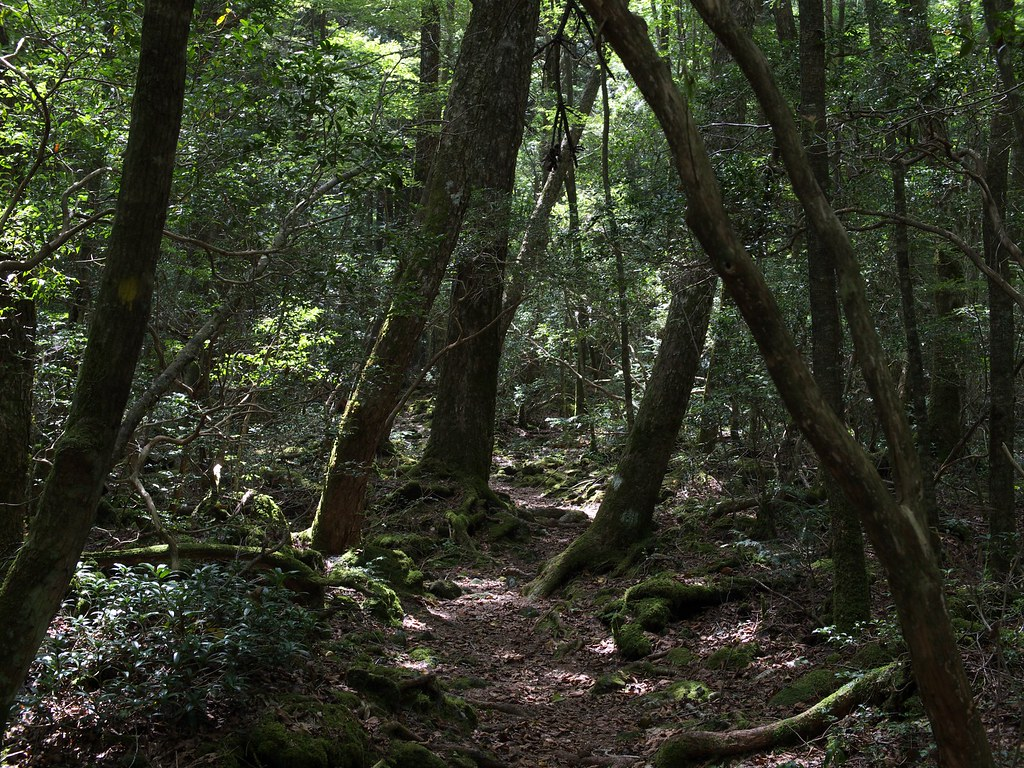The World's Best Photos of aokigahara and tree - Flickr Hive Mind