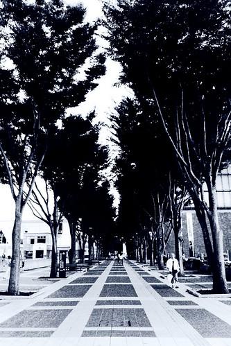 Tsukuba Center trees