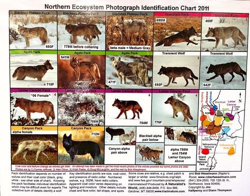 wolf chart 2011