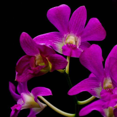 Squared Orchids
