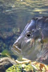 Aquarium de La Rochelle (Sphaxi) Tags: blue fish france aquarium eau bleu larochelle ocan mduse corail poitoucharente