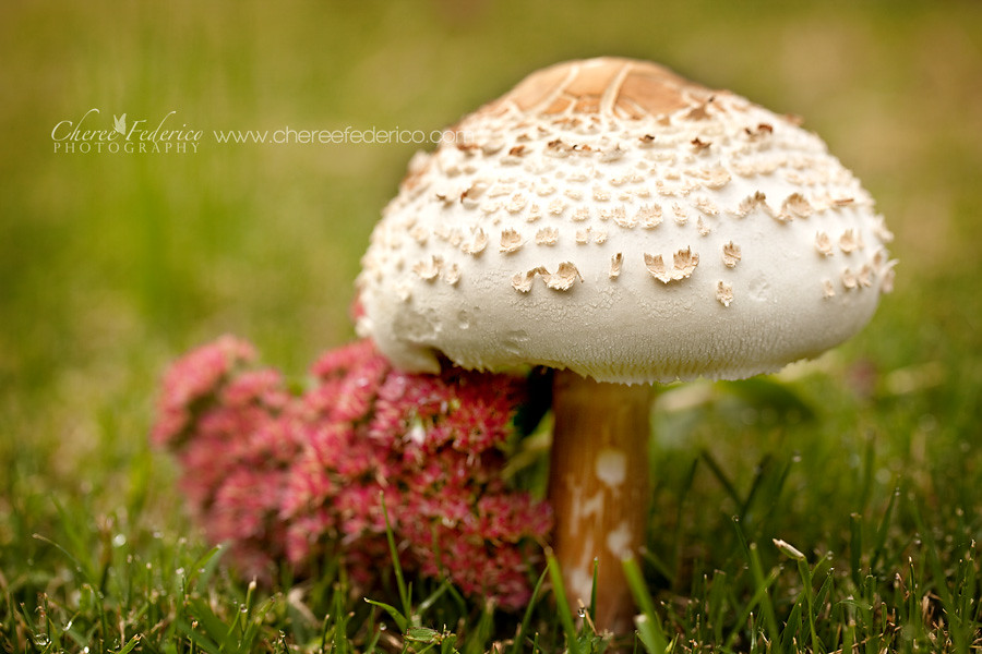Toadstool Growing