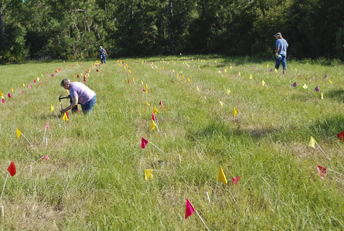 PMC staff preparing field for planting test plants in Ona, Florida.