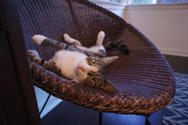 Micio_chair