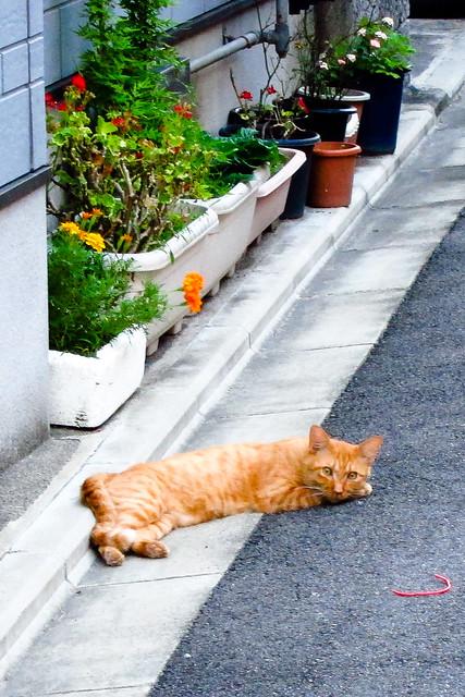 Today's Cat@2011-08-13
