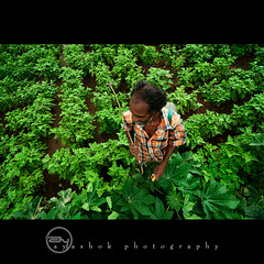 Green Factory (ayashok photography) Tags: girls boy bw woman india man lady self blackwhite nikon indian working documentary july dude copy bnw 2011 thenkasi brickfactory ayashok nikond300 tokina1116mm aya8090