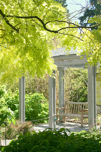 golden robinia and seating area