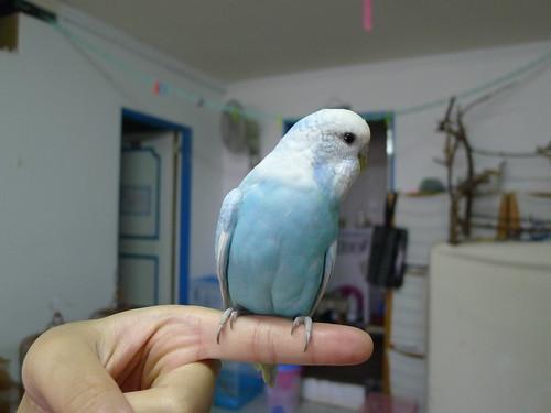 Nico@Queen's 鳥民宿