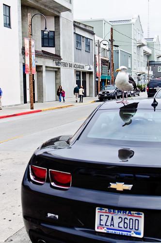 1106-SF&Monterey-2991