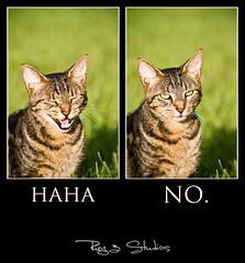 haha (Neptunecocktail) Tags: green cat photoshop intense eyes kitty lightroom