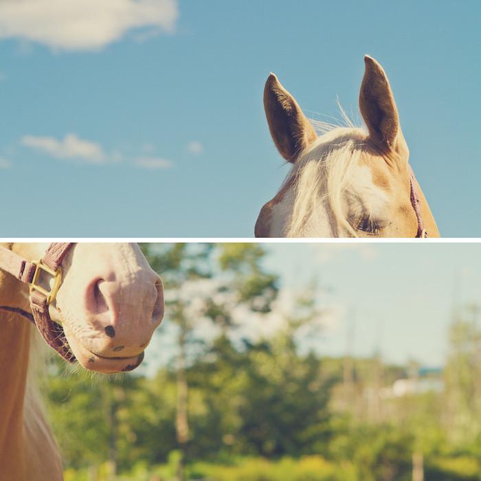 Halifax NS Wedding Portrait Horse Equine photography - Splash & Donna - Nicole Payzant -  (26 of 26)