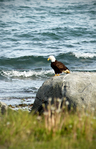 Haines - Eagle @ Beach