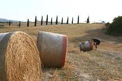 onde di fieno (Fabio Vanni) Tags: italy house vineyard country tuscany toscana agriturismo podere sperpetua