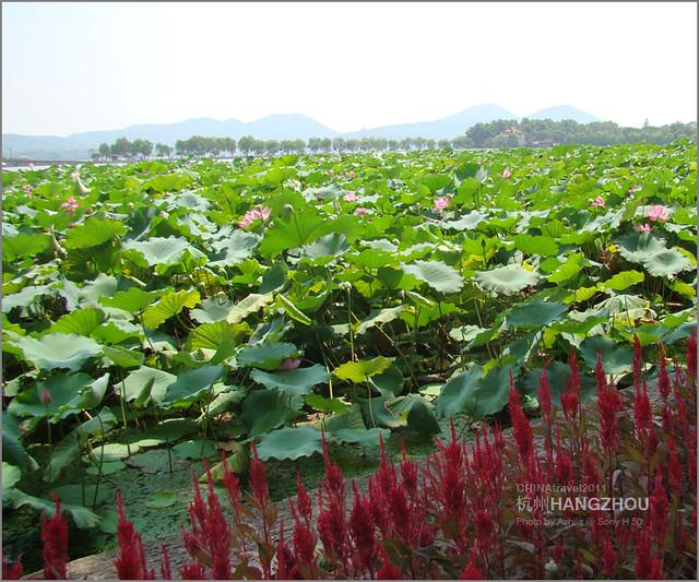 CHINA2011_072