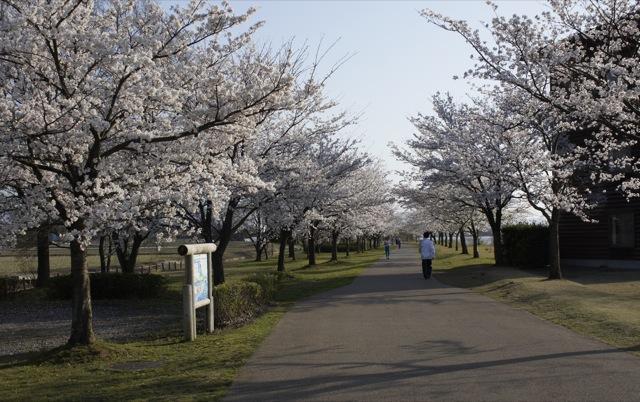 春はひと足ずつ 白山と木場潟その2