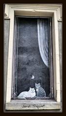 Falsa o real ?? (Jordi TROGUET (Thanks for 1.862.797+views)) Tags: leica france color blanco window colors cat ventana chat europa noir negro colores finestra gato gata luchon jordi francia blanc gat negre pintura gatita x1 pirineo europ pirineu bagneres gateta jtr bagneresdeluchon troguet jorditroguet leicacameraagleicax1