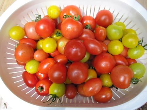 トマト収穫 2011.8 by Poran111