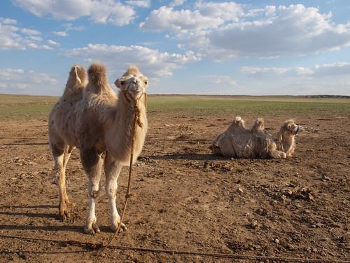 Desierto del Gobi 23