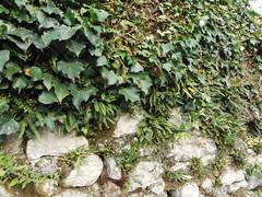 CIMG2856 (Maico Weites) Tags: slovenia slovenija sloveni