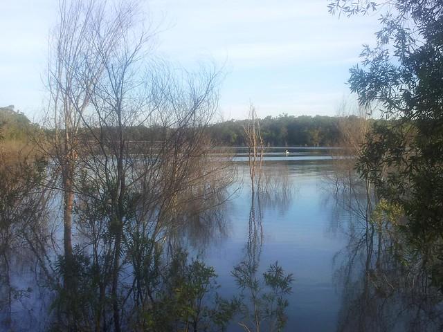 Pelican - Lake Samsonvale