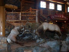 BASS PRO,  Springfield Mo. (proudnamvet........Patriot Guard Riders) Tags: vacation bass mo missouri pro springfield