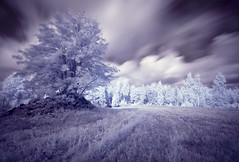 Infrared tree (jmhuttun) Tags: blue nature surreal na explore unreal surrealistic tone explored top20longexposure mygearandme mygearandmepremium mygearandmebronze mygearandmesilver mygearandmegold mygearandmeplatinum mygearandmediamond artistoftheyearlevel3 artistoftheyearlevel4