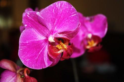 orquideas  by ay cecilia