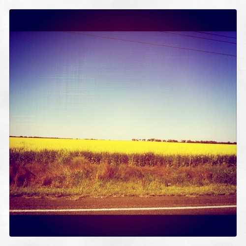 car travel with kids - canola