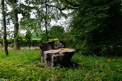 Newhailes Estate003 (NikWatt) Tags: trees sony handheld trunks greatcolors edinburghphotographers newhailesestate