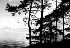 blåkulla (mara.photos) Tags: trees sea mystery sweden baltic sverige kalmar öland blåkulla byxelkrok blåjungfrun