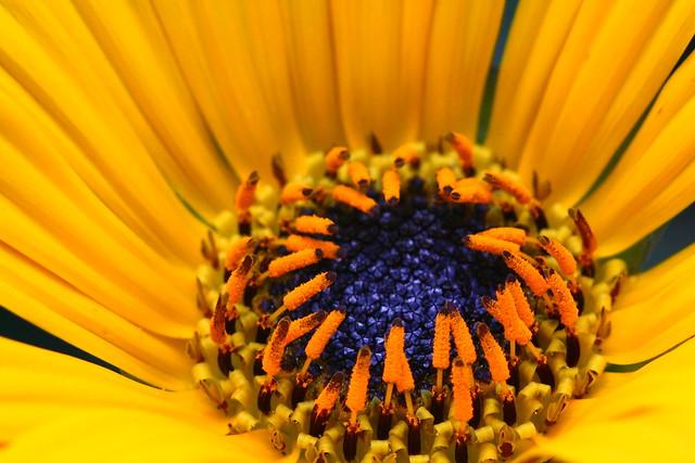 IMAGE: http://farm7.static.flickr.com/6085/6113779383_2ee0c58db3_z.jpg