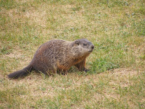 Groundhog number 2