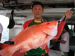 20100414 (fymac@live.com) Tags: mackerel fishing redsnapper shimano pancing angling daiwa tenggiri sarawaktourism sarawakfishing malaysiafishing borneotour malaysiaangling jiggingmaster