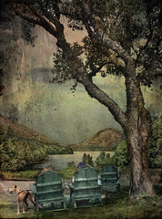 On Jordan Pond (D'ArcyG) Tags: dog lake tree texture water pond chairs digitalart maine adirondack acadia