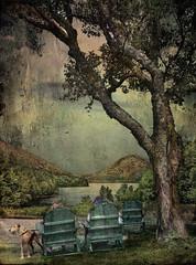 On Jordan Pond (D'ArcyG) Tags: dog lake tree texture water pond chairs digitalart maine adirondack acadia