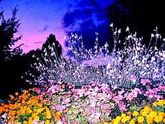 Es leuchtet sogar in der finsteren Nacht (helua333 ) Tags: nacht blumen vision amsee ssaps